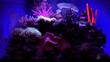 Saltwater Aquarium Lighting and Heating