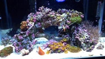 Live rock is the foundation for a thriving saltwater aquarium environment.