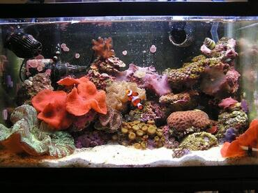 Many saltwater aquarium fish enjoy the addition of fresh vegetables to their diets.