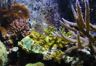 Feeding Corals —  Keeping Your Saltwater Invertebrates Healthy