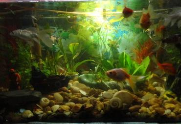 Safety Tips for Freshwater Aquariums