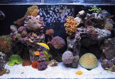 Types of Saltwater Tanks: Fish-Only, FOWLR and Reef Tanks