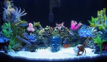 Simple Tips for Building a Saltwater Tank Without Breaking the Bank