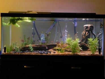 The Process of Cycling a Fish Tank
