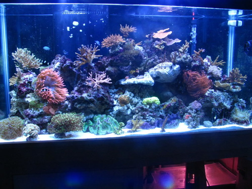 All About Tropical Fish Tanks