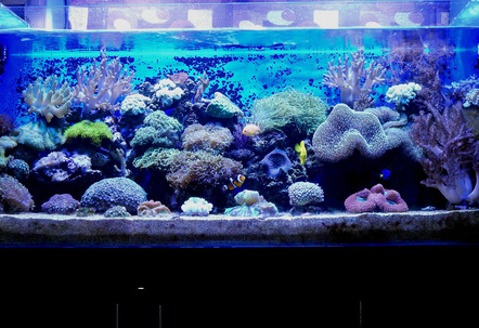 100G Mixed Reef Tankwith SoftiesLPS  SPS