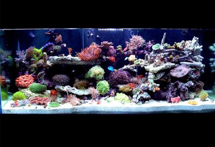 150 gallon fish tanks page 1 for 150 gallon fish tank dimensions