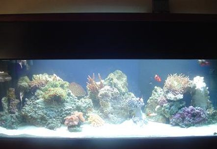 60 gallon  i have 15 snails 15 hermits 2 emerald crabs a pair of marroon clowns yellow eyed tang randalls goby and pistol shrimp pair lawnmower blenny and two firefish 110 lbs of live fiji rockequipment i am usingfluval 404aqua c remora pro w rio 1400 pumpw surface box250w heaterOrbit Compact Fluorescent Lunar Lights 48 w465 watt now being updatef to MH2 zoomed power head for flowan assorted mushroom rock fox coral purple star polyps green tipped hammer sun polyps yellow polyps xenia kenya tree leather ? rbta open brain