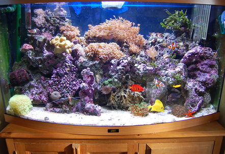 Jewel Vision 180 Bow Fronted 3ft wide by 16 inches deep  22 inches high 1 external Eheim professional filter with activated carbon  rowaphos in it x2 Hydor powerheads 45Kg Live rock Live sand as substrate Deltec MCE300 Protein Skimmer TMC UV sterilizer Eco Aqualizer 200W heater Aquamedic 150W metal Halide lighting unit suspended over my tank  2 strips of blue LED lights attached to my aquamedic unit as my actinics night viewingCertizon ozonizer connect to an ORP controller