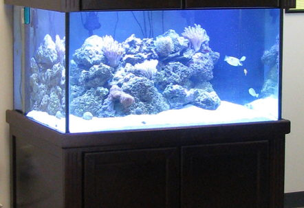 My Setup 200 gallon with 50 gallon sump