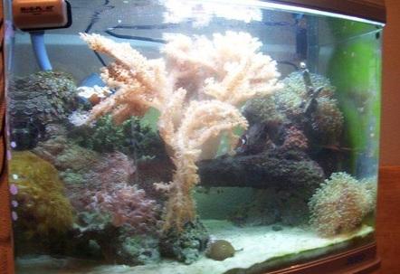 28 gallon reef