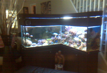 My 90 gallon customize L shape reef and fish tank
