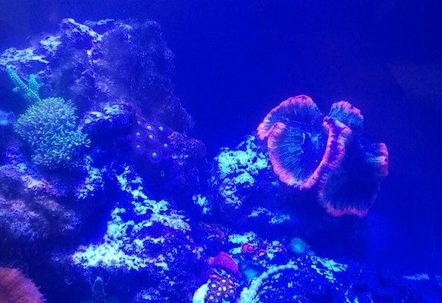 My new saltwater reef tank 24 24 24 cube tank Its been running two months now and Im loving it
