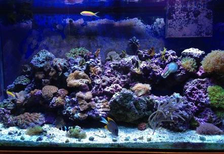 90 gallon mixed reef