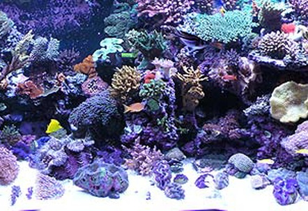 Full reef tank picOver 100 coral and 50 fish