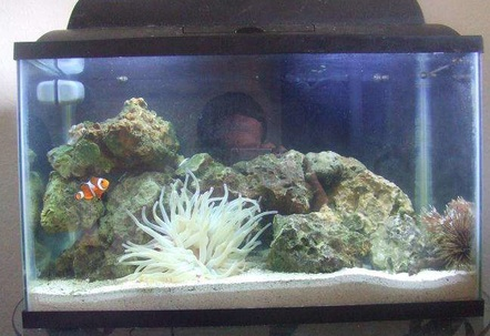 9 fish in 10 gallon tank aquarium mutualistic for How many fish can be in a 20 gallon tank