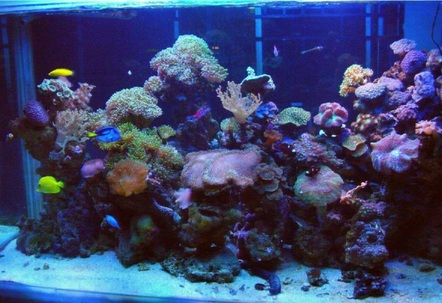 Marine reef Display