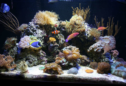 My 100 Gallon Reef Tank! I LOVE this hobby it is so relaxing and cool to watch the corals change and grow Its fun buying new coral but an expensive hobby