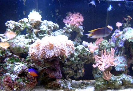 My 90 Gallon Reef
