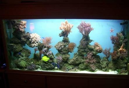 mix reef