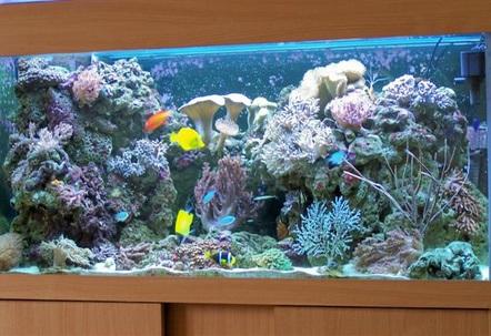 my reef