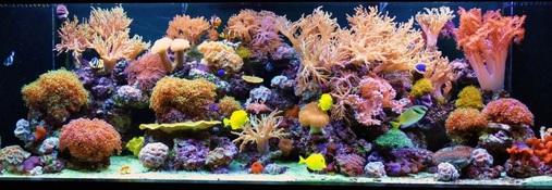 200 Gallon Reef Tank