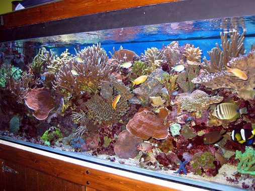 this is mi  reef tank  very pretty a