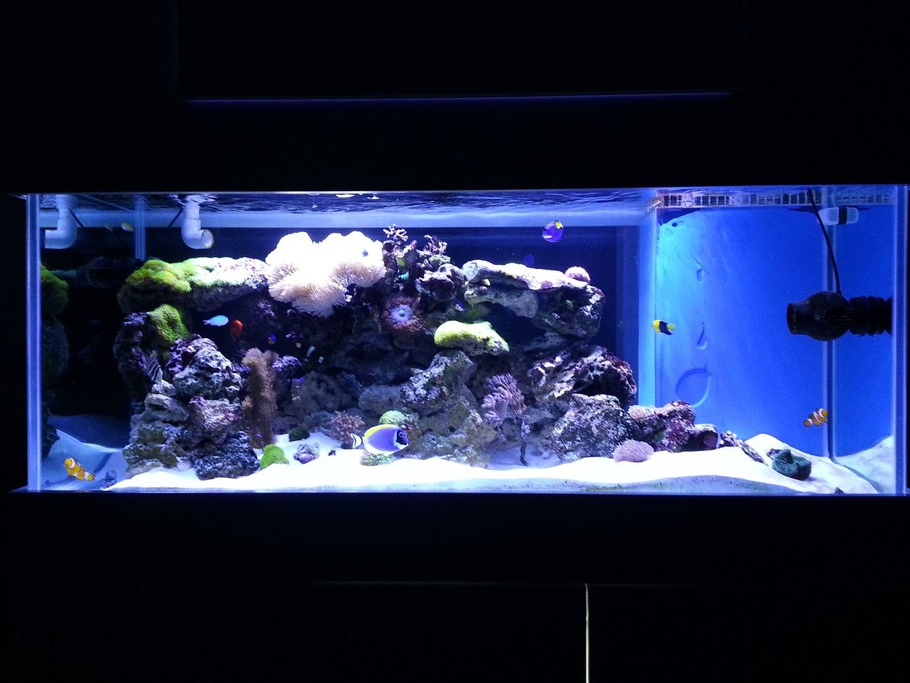 Shao30 39 s reef tanks photo id 41138 full version for Saltwater fish for 10 gallon tank