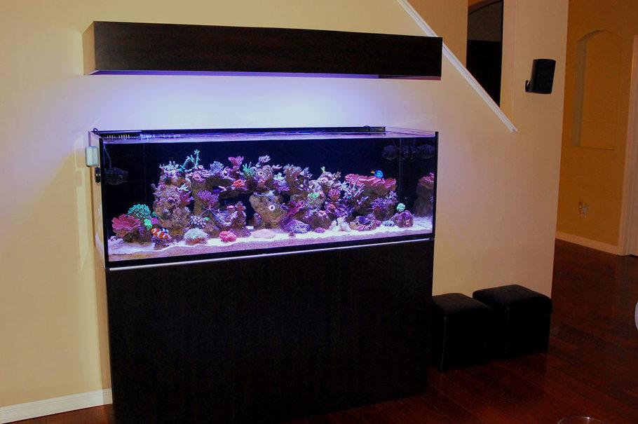 Tenshoa S Reef Tanks Photo Id 41834 Full Version
