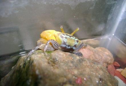 crabby!!