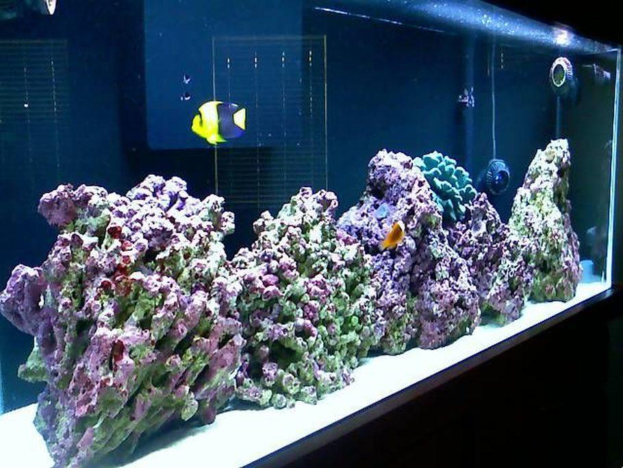Dolphinsfan S Saltwater Fish Tanks Photo Id 22859 Full