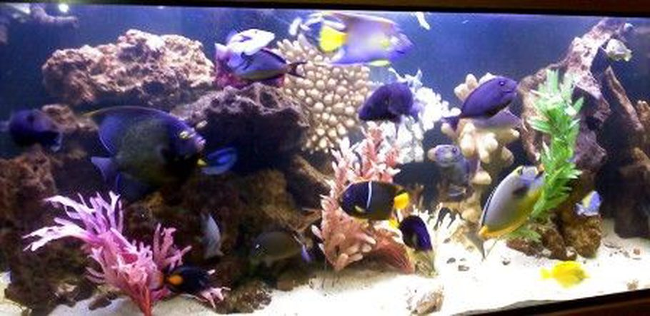 Themoz 39 s saltwater fish tanks photo id 29833 full for Fish only saltwater tank