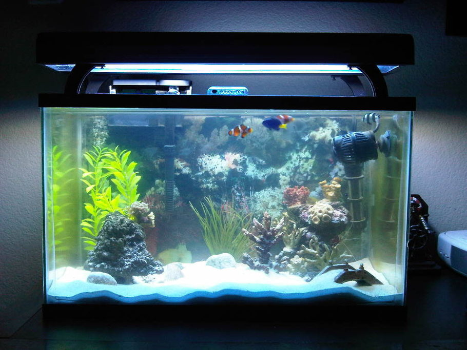 Garrett4555 39 s saltwater fish tanks photo id 33108 full for Arowana tank decoration