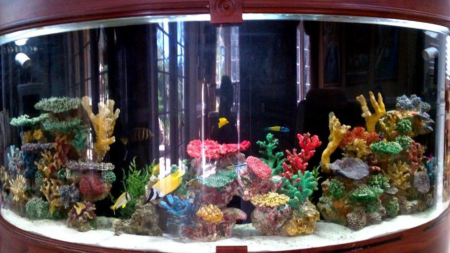 Most beautiful saltwater fish tanks all time for Saltwater fish tank
