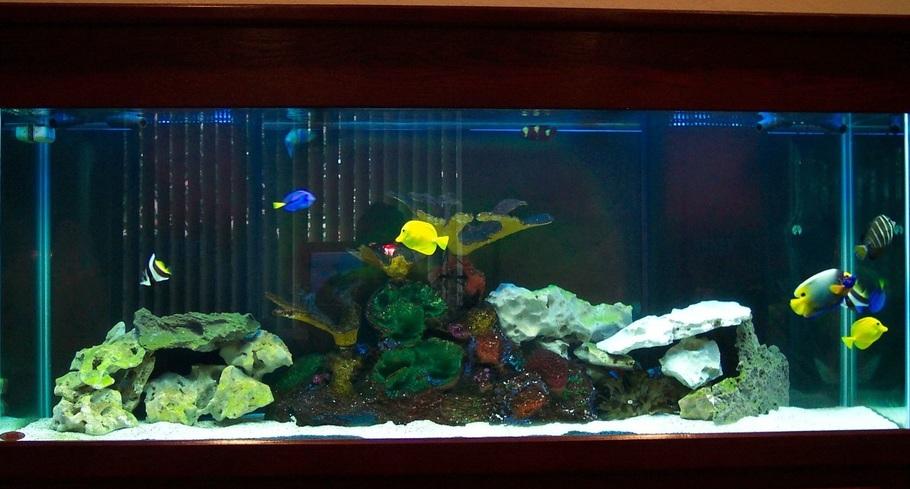 Saltwater fish tank only saltwater aquarium fish tanks for Decoration pour aquarium poisson rouge