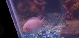 pink convict