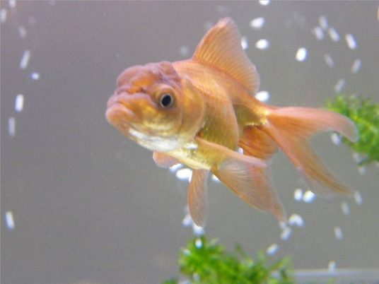 Alistairw's Freshwater Fish Photo (ID 24636) - Full ...