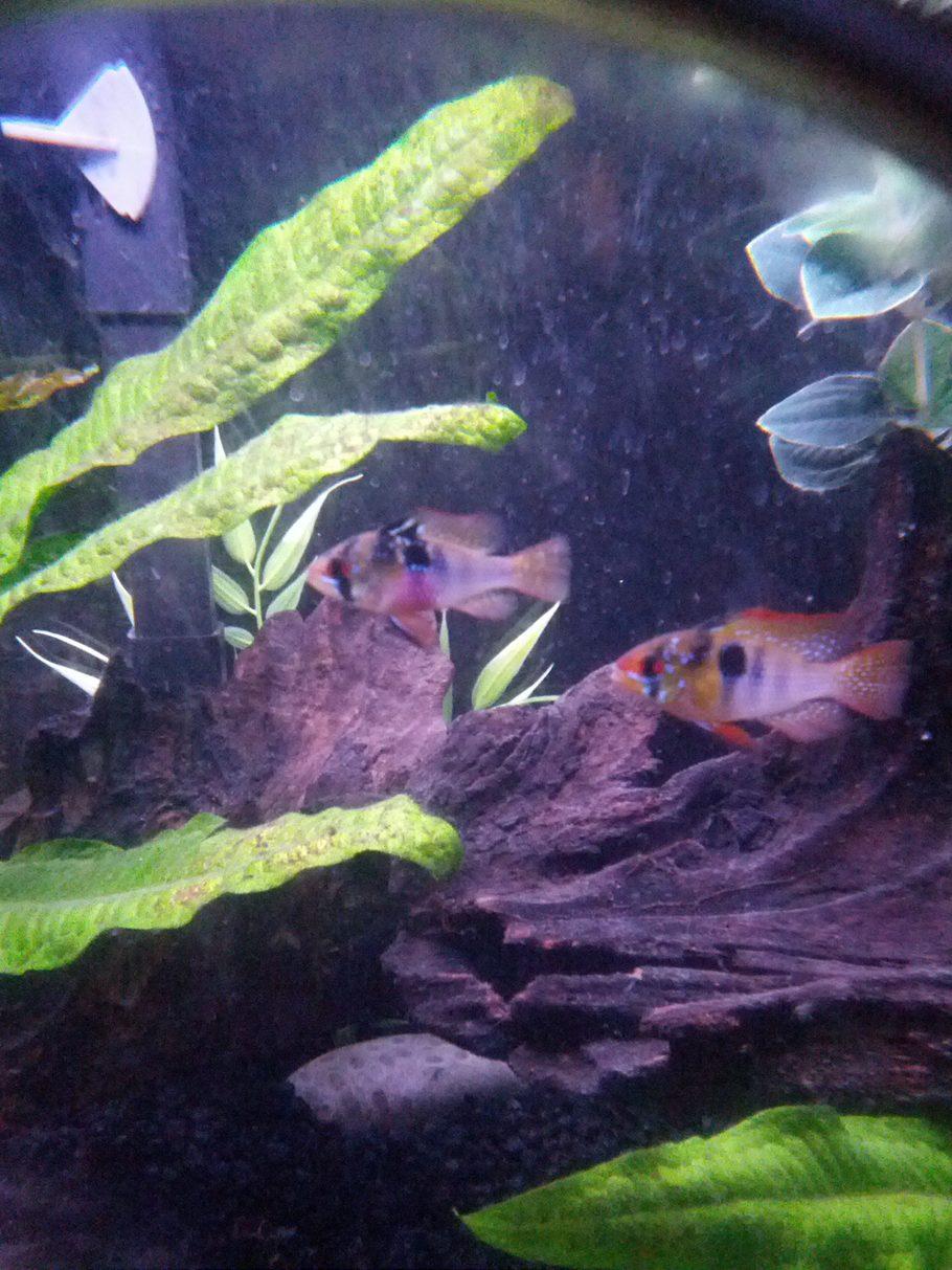 Freshwater aquarium fish species ebook - Rated 10 Iand625