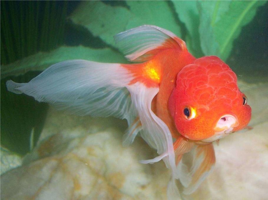 Sarajute's Freshwater Fish Photo (ID 4710) - Full Version ...