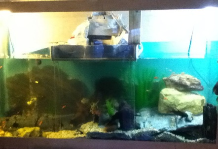 One of a kind fish tank