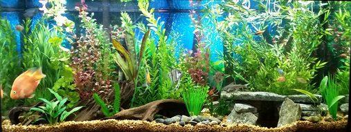 Most Beautiful Freshwater Tanks 2016 Ratemyfishtank Com