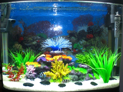 5x Burundi Frontosa1x Sailfin Pleco20Odd Neon Tetras1x Fake coral rock in centre4x Fake plants580x300x500mm MinJiang Baolai Aquarium 90Ltrs 23 Gallons2x15W Built in fluros came with tankMinjiang R3580 Powerhead came with tank  states Qmax 1000Lh  but am assuming 580Lh? flowing into drip tray above which has Eheim Hollow ceramic rings on the bottom and Filter Fibre WoolFluval 205 Canister Filter  Standard sponges and Bottom to top Purigen  Carbon Matrix Fluval Noodles i think thats right  was 2 weeks ago now only just installed it lolScuba 50  50w heaterGravel size is around 3mm  small white rocksScattered large polished pebbles
