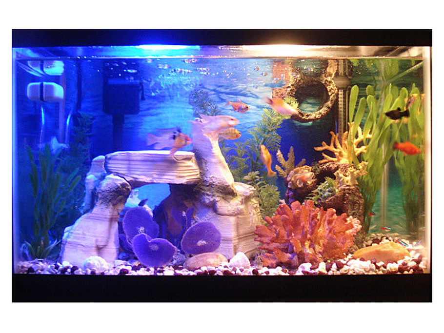 10 gallon fish tank maintenance guide 2017 fish tank for How to maintain fish tank