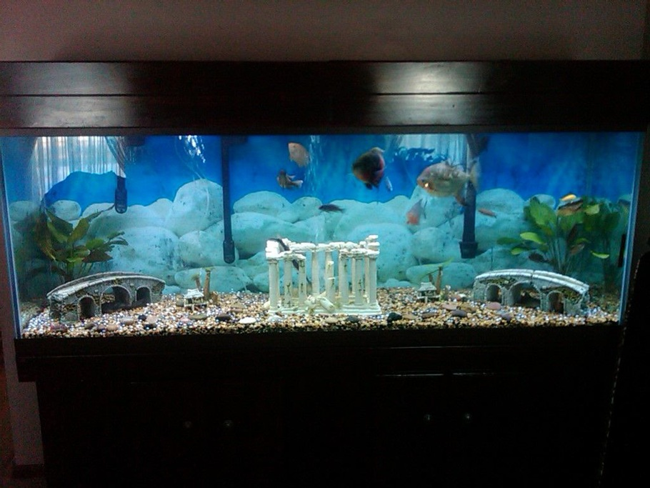 Thedude749 39 s freshwater tanks photo id 35176 full for 150 gallon fish tank