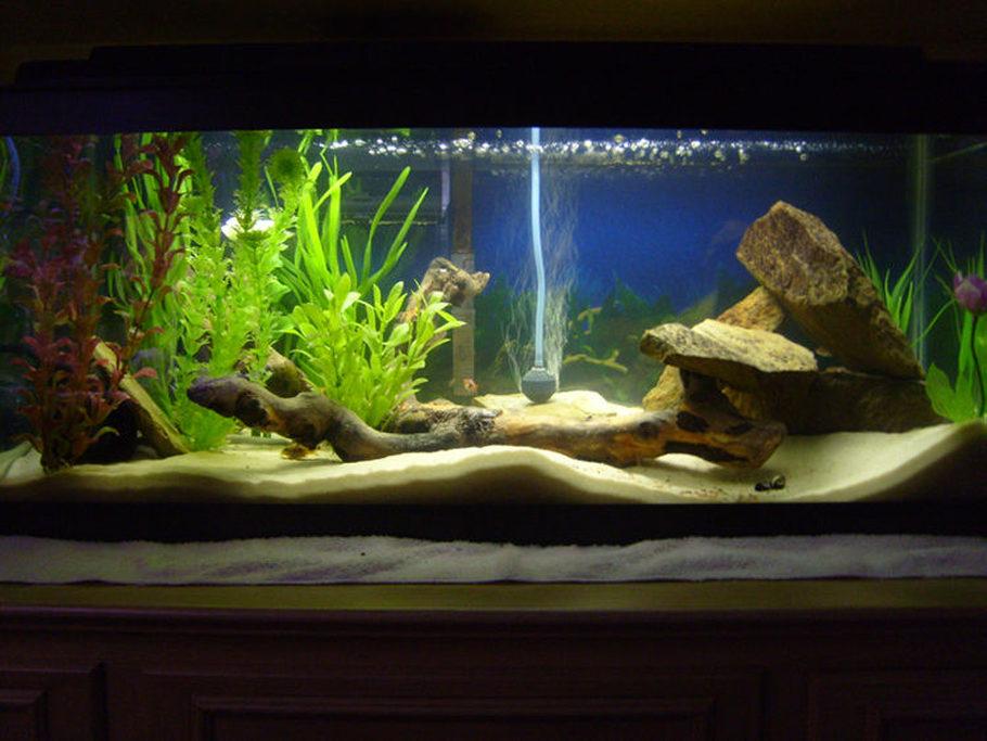 Kingeroc S Freshwater Tanks Photo Id 15135 Full