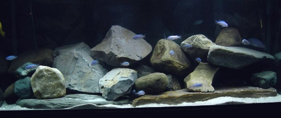Exiled 39 s freshwater tanks photo id 3299 full version for African cichlid rock decoration