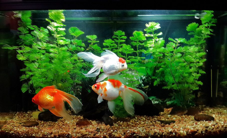 Danbor27 S Freshwater Tanks Details And Photos Photo