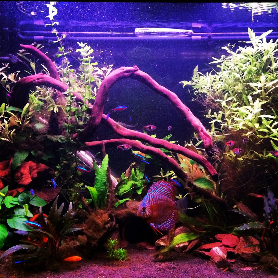 Freshwater fish compatibility - Rated 6 Geordie78