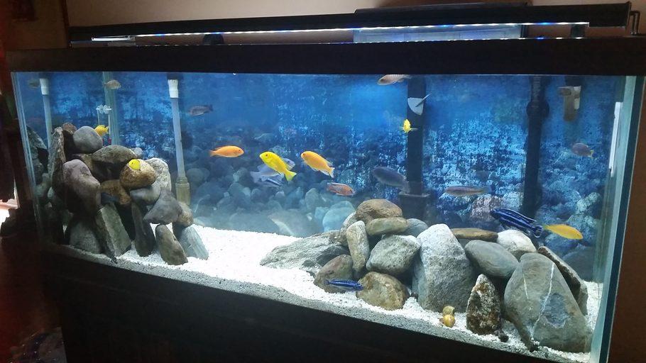 Jrox72 39 s freshwater tanks photo id 42589 full version for 150 gallon fish tank dimensions