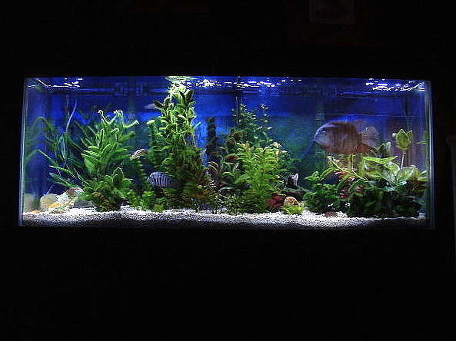 Mbkelchner S Freshwater Tanks Photo Id 5306 Full